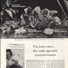 "1976 Carnivorous Plants Article ""The insect eaters"""