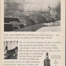 "1962 Jack Daniel's Whiskey Ad ""Our neighbors' best grains"""