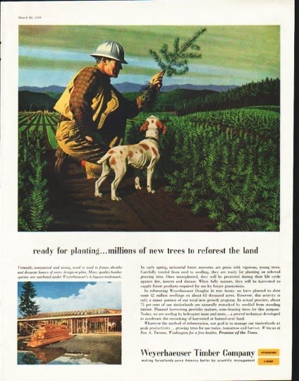 "1958 Weyerhaeuser Timber Company Ad ""ready for planting"""