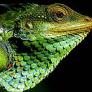 Forest Lizard Close Up Amazing 13 by 19 Photograph