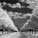PERFECT COUNTRY SETTING TREES LONG DRIVEWAY FARMHOUSE BLACK & WHITE CLOUDS PHOTO