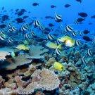 Beautiful Underwater Fish AMAZING  13 x 19 Color Photo