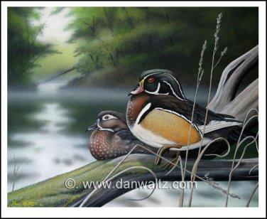Misty River Wood Ducks Print