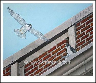 Peregrine Falcons Original