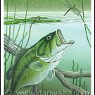 Largemouth Bass Attack Print