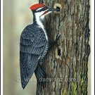 Pileated Woodpecker Original