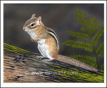 Chipmunk Original Painting