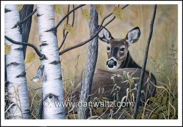 Whitetail deer (Tranquil Response) Original