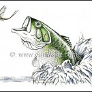 Largemouth Bass Illustration Original