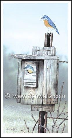 Bluebirds Original