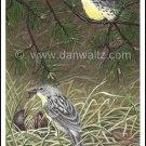 Kirtland Warblers Print