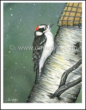 Downy Woodpecker Print