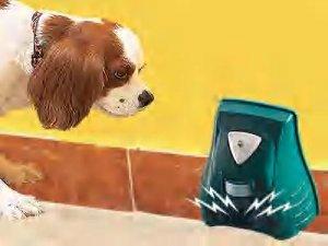 Animal Chaser and Burglary Alarm
