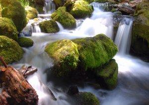 Watson Falls Spring - 5x7 - Original Fine Art Photograph