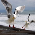 On the Wing - 5x7 - Original Fine Art Photograph