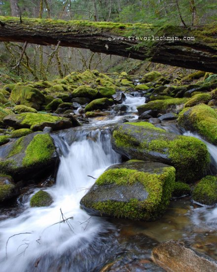 Frog Gulch Spring -8x10 - Original Fine Art Photograph