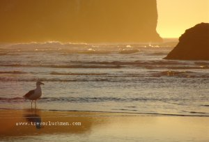 Seagull Sunset - 4x6 - Original Fine Art Photograph