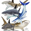 Guy Harvey Shark Collage Size Large