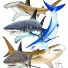 Guy Harvey Shark Collage Size 2XLarge