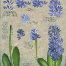 **Donna Dewberry RTG - Hyacinth and Water Lily - Tole Painting