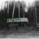 LOG CABIN IN THE FORESTS OF PUGET SOUND, WA 1906(8x10) ANTIQUE DOG RP PHOTOGRAPH