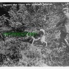 GERMAN RED CROSS DOG SEEKING WOUNDED WW1 1914 (8x10) ANTIQUE RP DOG PHOTOGRAPH
