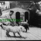 FEEDING DOGS ON SHIP KAISERIN VICTORIA IN 1910 (8x10) ANTIQUE RP DOG PHOTOGRAPH