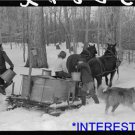 *NEW* Antique Cows Photograph:horse,snow,wagon,collie,maple syrup sap gatherers