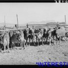 *NEW* Antique Cows Photograph: Herd of Dairy Cows, West, Box Elder County, Utah
