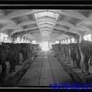 *NEW* Antique Cows Photograph:Government Stud Farm, The Cow Stable Interior