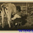 *NEW* Antique Cows Photograph:Jack,8, Milking Cows, early morning, 1915 August