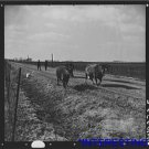 *NEW* Antique Cows Photograph: 12 year farmer driving cows, Charles Miller, dust