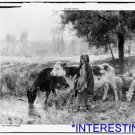 *NEW* Antique Cows Photograph:Large: Crossing River, Dans Le Vallee, Woman, Tree