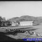 *NEW* Antique Cows Photograph:Large: Wallingford, Vermont, Farm, Going home