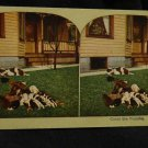 ORIGINAL STEREOVIEW ANTIQUE CARD ART: COUNT THE PUPPIES, DOGS SLEEPING ON LAWN