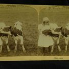 ORIGINAL STEREOVIEW ANTIQUE CARD ART: UNDERWOOD GIRL FEEDING COW CALF LUNCH