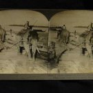 ORIGINAL STEREOVIEW ANTIQUE CARD ART: ELEPHANTS, TEAK, SALWIN RIVER, BURMA