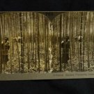 ORIGINAL STEREOVIEW ANTIQUE CARD ART: KEYSTONE: BAMBOO PLANTATION NANKING CHINA