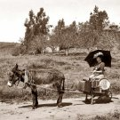 REPRODUCTION ANTIQUE PHOTO:SEPIA: ANTIQUE SCENE: WOMAN ON WHEELBARROW DONKEY?