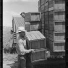 *NEW* Antique Classic Truck Photo[8x10] Packing Crates of Peas onto Truck, Crate