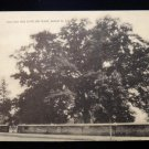 ANTIQUE ORIGINAL POSTCARD: OLD OAK TREE, 300+YRS, SALEM, NEW JERSEY, NO ADDRESS
