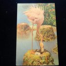 ANTIQUE ORIGINAL POSTCARD: A FLAMINGO,FL  129 BRADSTREET AVE, REVERE 51, MASS