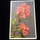 ANTIQUE ORIGINAL POSTCARD: RHODODENDRON FERRUGINEUM, ALPINE ROSE RUSTY LEAVED