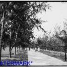 *NEW* Antique Bicycle Photo:(8X10) Palm Beach, Florida, -Wheelchair Path-Trees