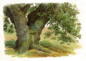Paint Trees In Watercolours Ebook