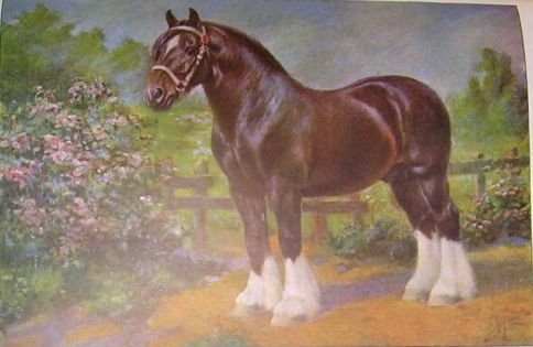 1923 SHIRE HORSE PRINT by EDWARD H MINER Pl-17