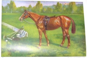 1923 POLO PONY (HORSE) PRINT by EDWARD H MINER Plate-22