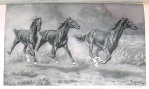 1923 HORSES: THE TROTTER, PACER &amp; RUNNER PRINT by MINER