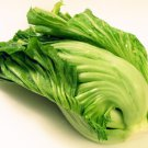 Green Kai Choy 300 seeds Chinese mustard Green Hairloom
