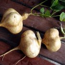 Jicama Yam bean 45 seeds Heirloom Thai seeds